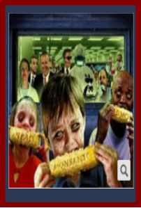 GMO Sample 2a